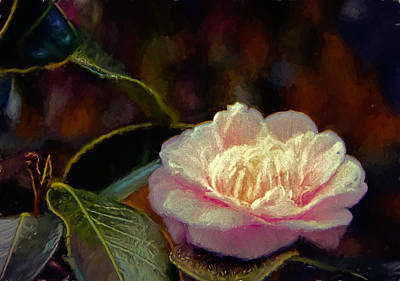 Pink Camellia Poster