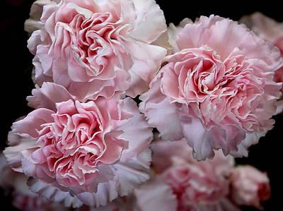 Pink Carnations Poster by Mavis Reid Nugent