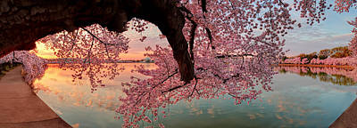Pink Cherry Blossom Sunrise Poster