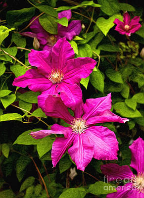 Pink Clematis Poster by Lena Auxier