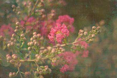 Pink Crepe Myrtle Poster by Suzanne Powers