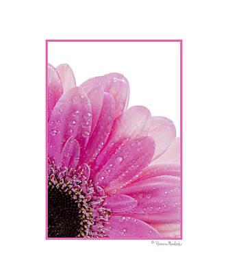 Pink Daisy Petals Poster
