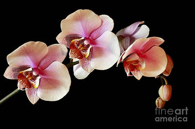 Pink Exotique Poster by Inspired Nature Photography Fine Art Photography