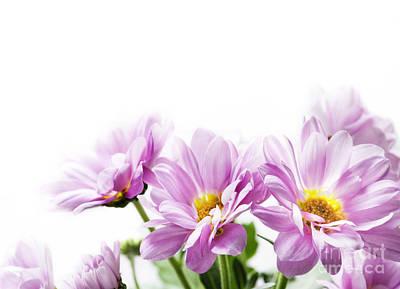 Pink Flowers Poster by Jelena Jovanovic