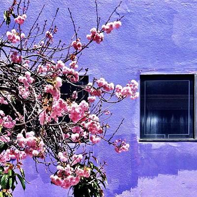 Pink Flowers Poster by Julie Gebhardt