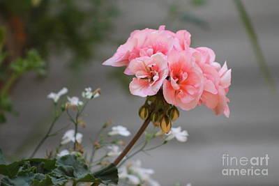 Pink Geranium Poster by Leone Lund