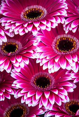Pink Gerbera 1. Amsterdam Flower Market Poster