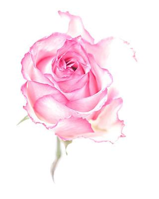 Pink Impression Poster
