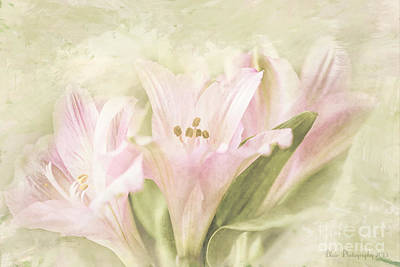 Poster featuring the painting Pink Lilies by Linda Blair