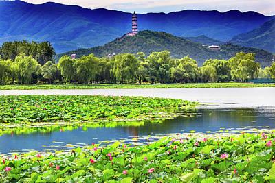 Pink Lotus Pads Garden Reflection Poster