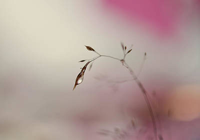 Pink Morning Blush Poster by Heidi Westum