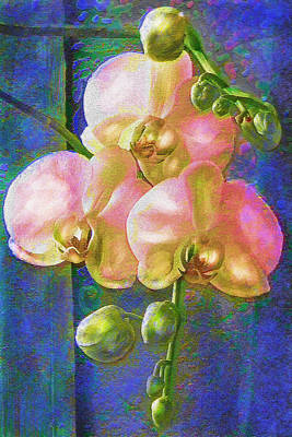Pink Orchids Poster by Jane Schnetlage