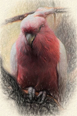 Pink Painted Parrot Poster by Terry Cork