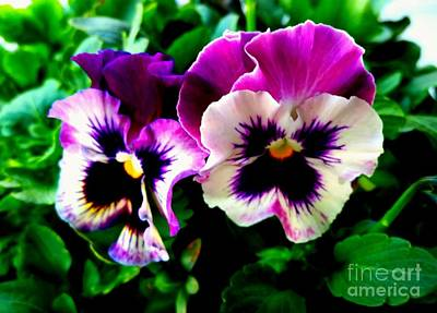 Violet Pansies Poster by Rose Wang