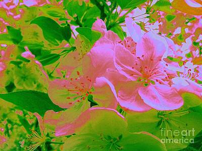Pink Passion Crabapple Poster by Shelia Kempf