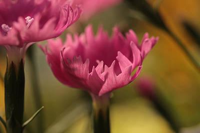 Pink Petal Breeze Poster