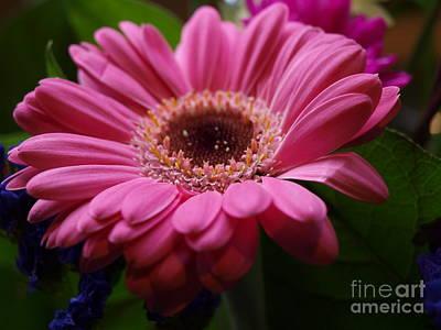 Pink Petal Explosion Poster