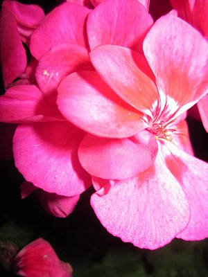 Pink Petals Poster by Rosita Larsson