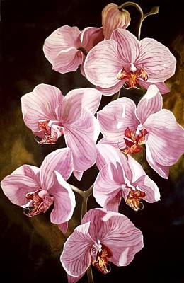 Pink Phalaenopiss Orchids Poster by Alfred Ng
