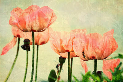 Poster featuring the photograph Pink Poppies In The Garden by Peggy Collins