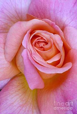Pink Rose Closeup II Poster