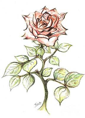 Pink Rose Poster by Teresa White