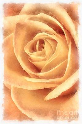 Pink Rose Watercolor Poster by Edward Fielding