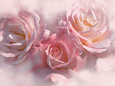 Pink Roses In The Mist Poster