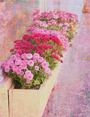 Pink Sidewalk Flowerbox Poster