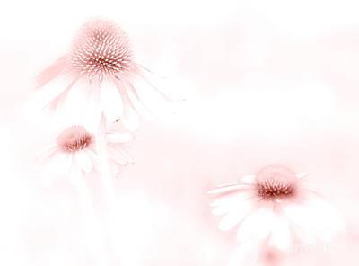 Pink Sonata  Poster by Andrea Kollo