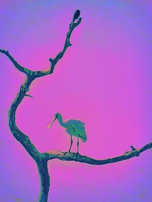 Pink Spoonbill Poster