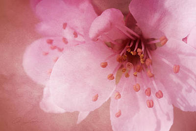 Pink Spring Blossom Poster by Ann Lauwers