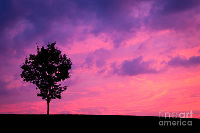 Pink Sunrise Silhouette Poster by Amy Cicconi