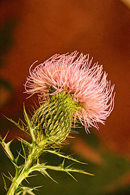 Pink Thistle Flower Poster