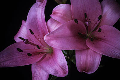 Pink Tiger Lilies Poster