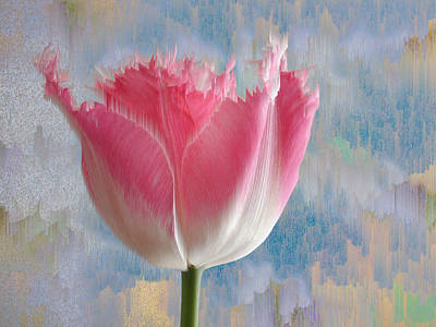 Pink Tulip Poster by Mark Greenberg
