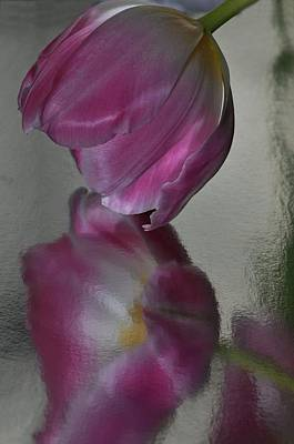 Pink Tulip Reflected In Silver Water Poster