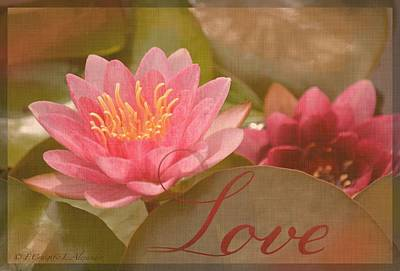 Pink Water Lily Love Poster by Fiona Craig
