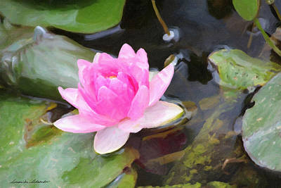 Pink Water Lily Poster by Susan Schroeder