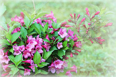 Poster featuring the photograph Pink Weigela by Trina  Ansel