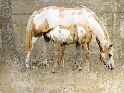 Pinto Mare And Filly Poster by Betty LaRue