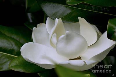 Plain Magnolia Poster