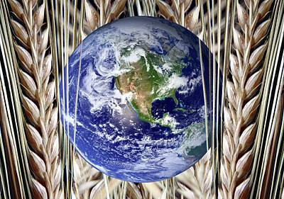Planet Earth And Wheat Poster