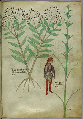 Plant Poster by British Library