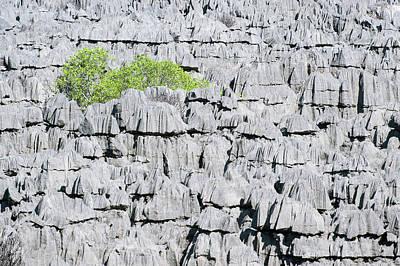 Plant Growing On Limestone Rocks Poster