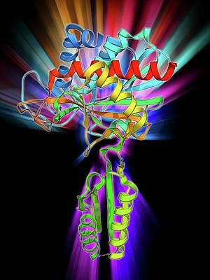 Plant Hormone Regulator Poster by Laguna Design