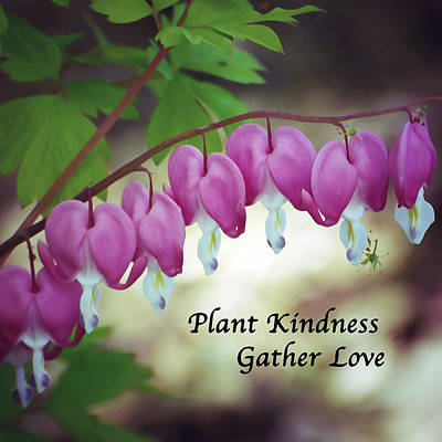 Plant Kindness - Gather Love Poster by Kerri Farley