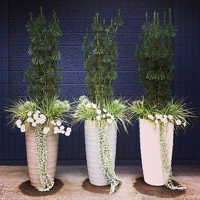 Planters And Blue Poster