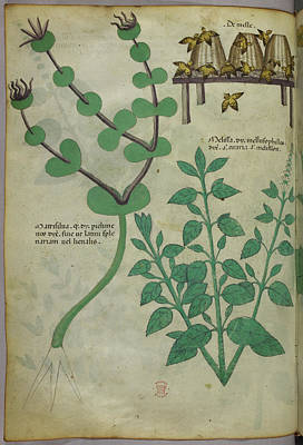 Plants And Beehives With Bees Poster by British Library
