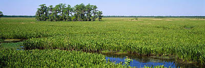 Plants On A Wetland, Jean Lafitte Poster by Panoramic Images